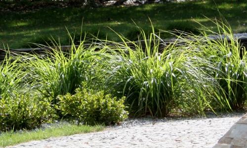 trawy ozdobne 2