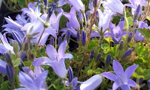 rośliny kwitnące