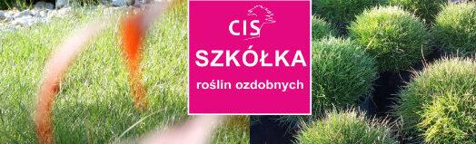 cis_ogrody_szkolka_roslin_ozdobnych
